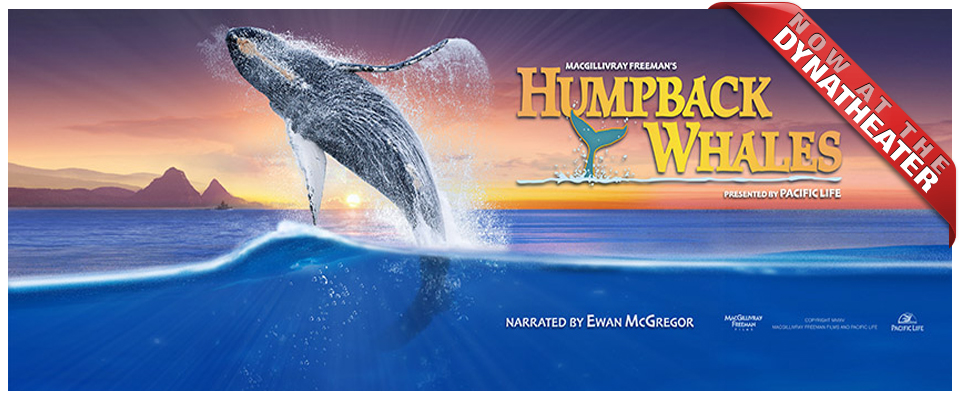 Humpback Whales Imax Museum Of Natural History