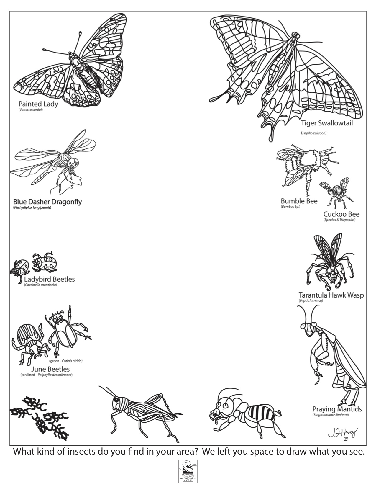 Insects Coloring Sheet