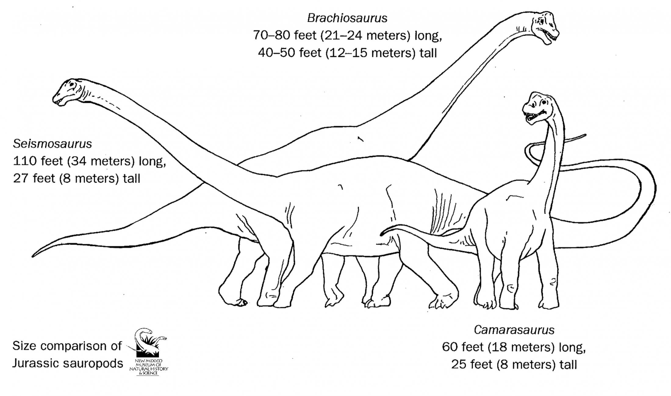 Jurassic Sauropod Compare  Coloring Sheet
