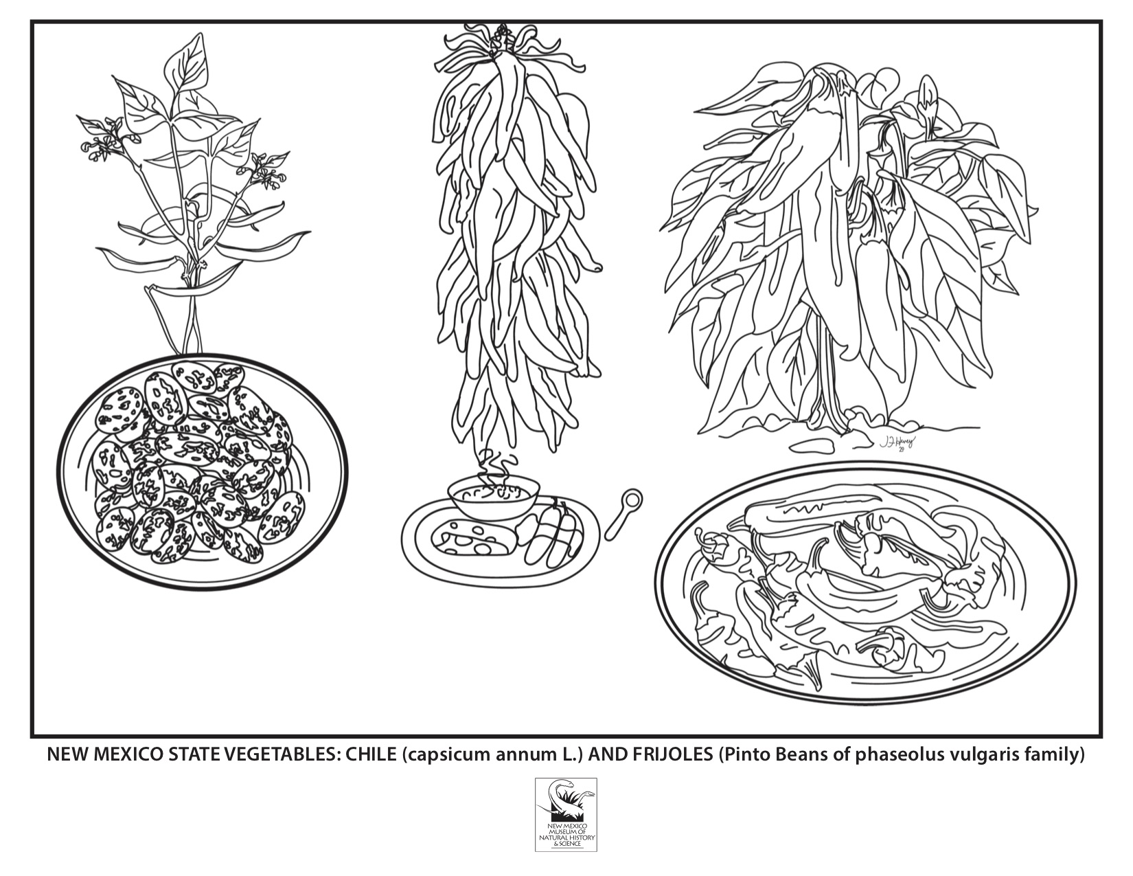Vegetable Coloring Page